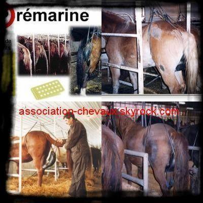 Pémarin = Médoc hormonal issue de torture animale 26c98e66