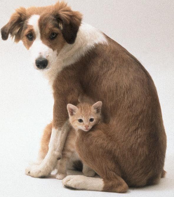 """Résultat de recherche d'images pour """"image tendre animaux"""""""
