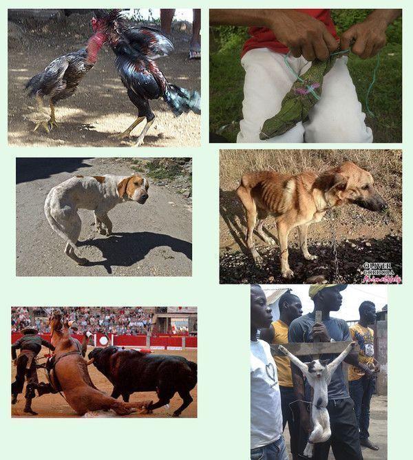 Journée mondiale des animaux martyrs