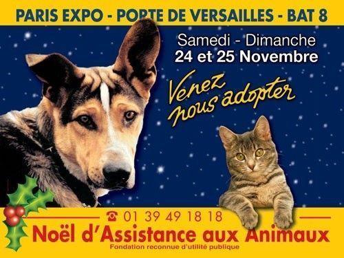 Un vrai no l pour les animaux abandonn s centerblog - Adresse paris expo porte de versailles ...